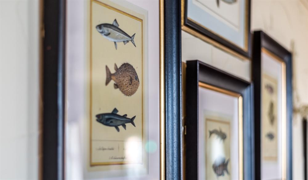 Photos of fish