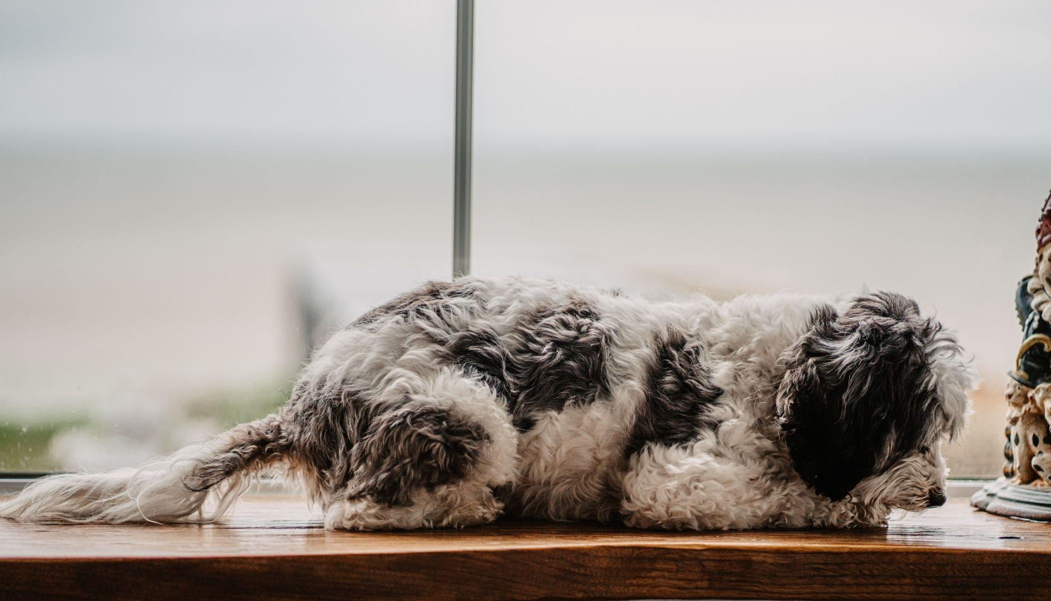 Dog Friendly Holidays in North Norfolk