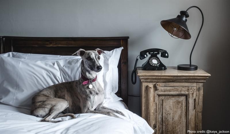 One-Night Luxury Petaway