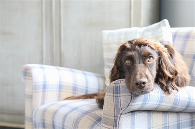 Insta-Famous dogs @spaniellife is an account you simply must follow.