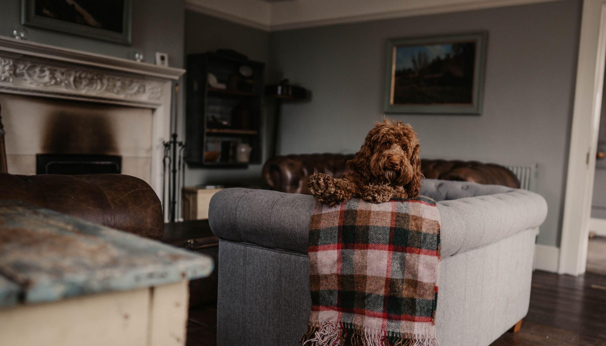 Dog-Friendly Hotel