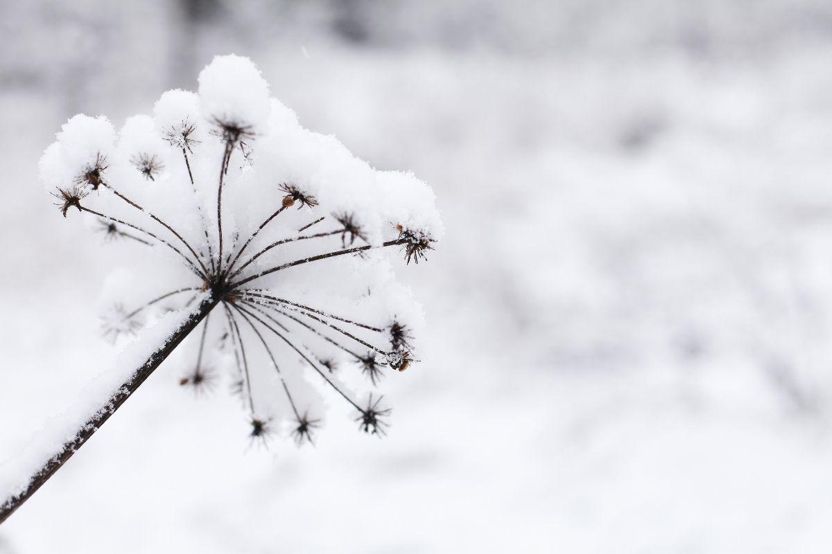 Winter at Blickling Estate