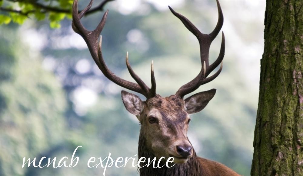 Shieldaig McNab Experience